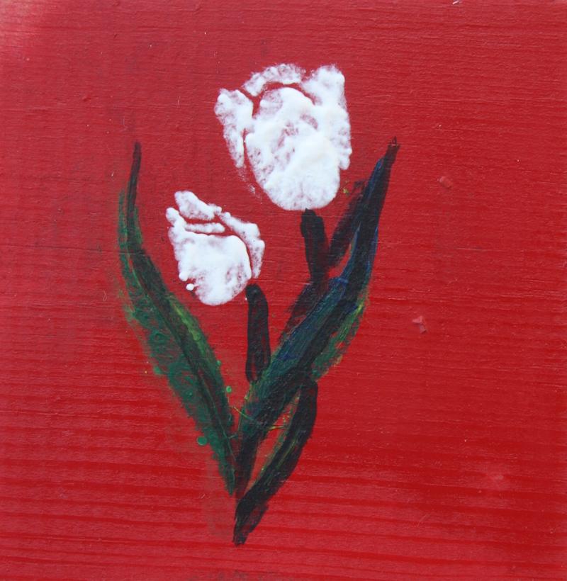 140713 - 5 White Tulip