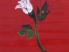 140713 - 4 White flower