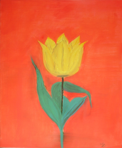 yellow-tulip-o29-r-cummiskey