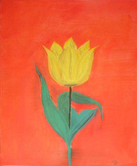 yellow-tulip-o29-r-cummiskey